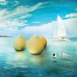 The Sea Apple